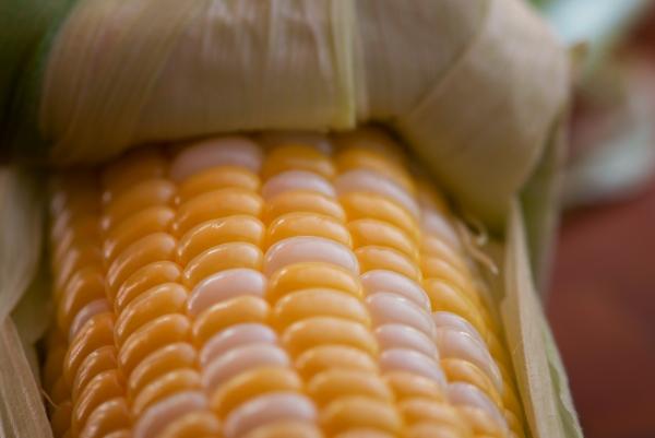 succulent corn kernels