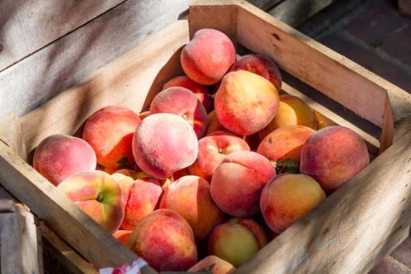 a lug of peaches